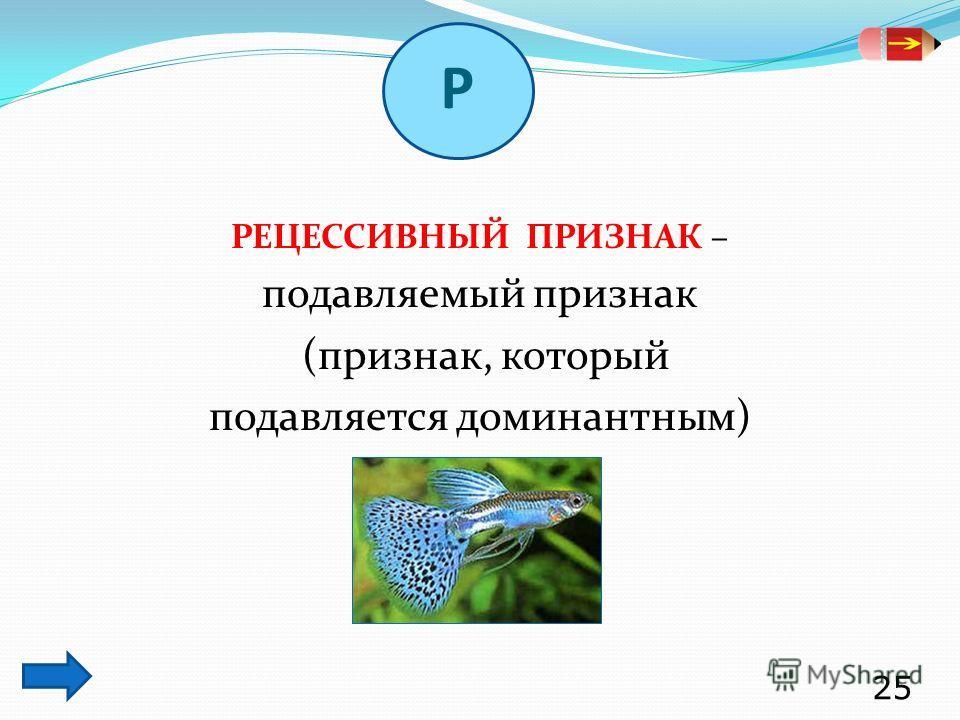 РЕЦЕССИВНЫЙ ПРИЗНАК – подавляемый признак (признак, который подавляется доминантным) 25 Р