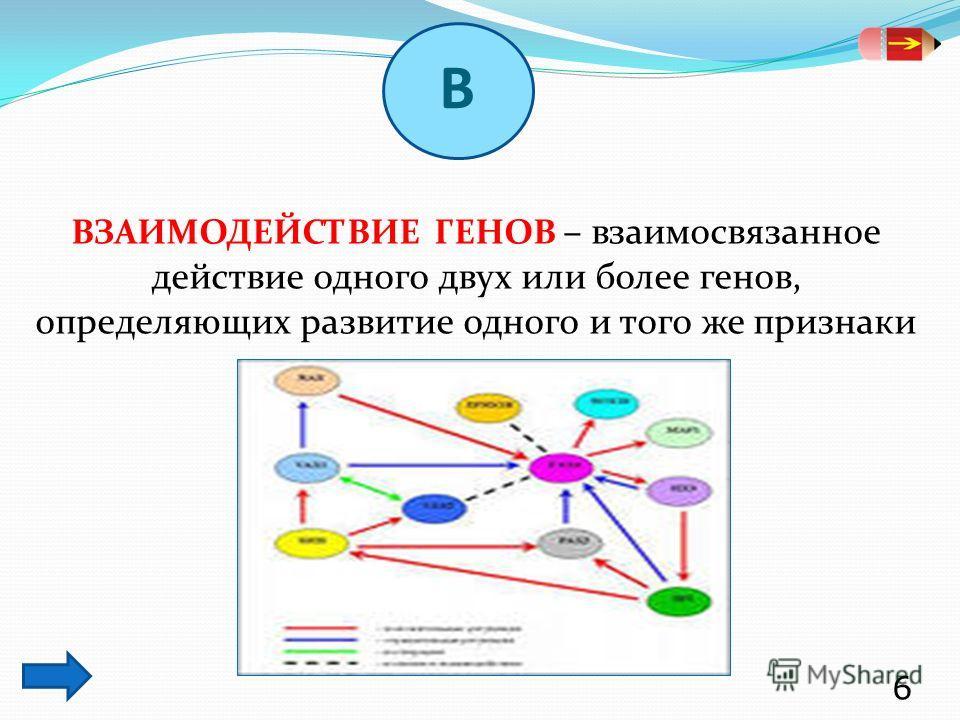 ВЗАИМОДЕЙСТВИЕ ГЕНОВ – взаимосвязанное действие одного двух или более генов, определяющих развитие одного и того же признаки 6 В