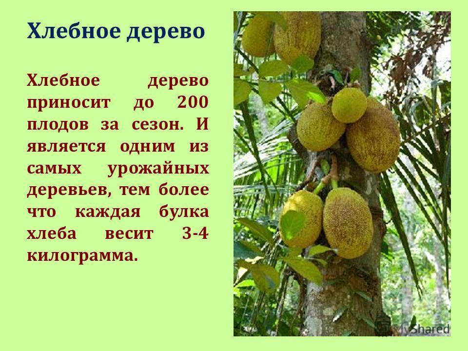 Презентация Удивительные Деревья