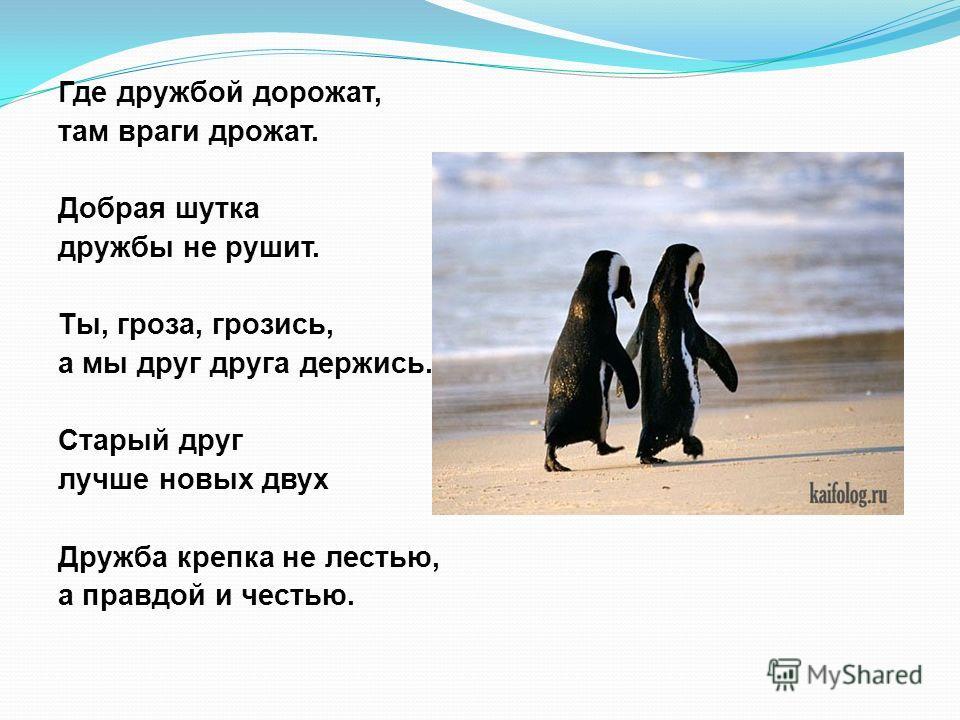 Где дружбой дорожат, там враги дрожат. Добрая шутка дружбы не рушит. Ты, гроза, грозись, а мы друг друга держись. Старый друг лучше новых двух Дружба крепка не лестью, а правдой и честью.