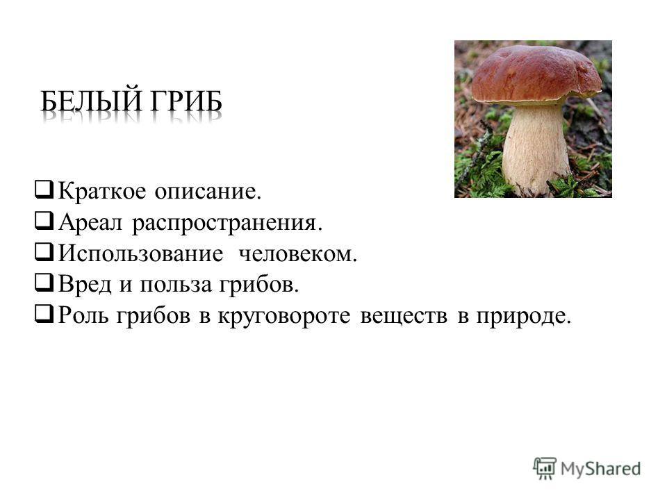 Краткое описание. Ареал распространения. Использование человеком. Вред и польза грибов. Роль грибов в круговороте веществ в природе.
