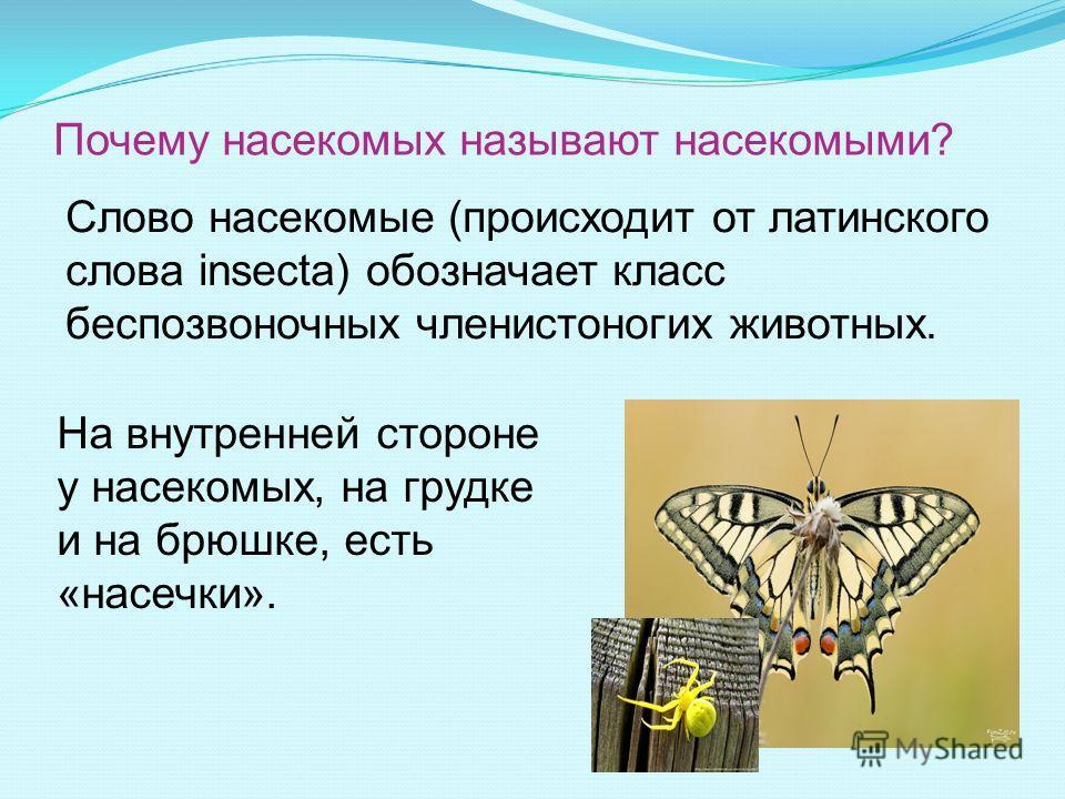 Почему насекомых называют насекомыми? На внутренней стороне у насекомых, на грудке и на брюшке, есть «насечки». Слово насекомые (происходит от латинского слова insecta) обозначает класс беспозвоночных членистоногих животных.