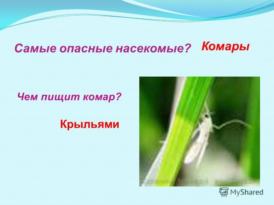 Самые опасные насекомые? Чем пищит комар? Комары Крыльями