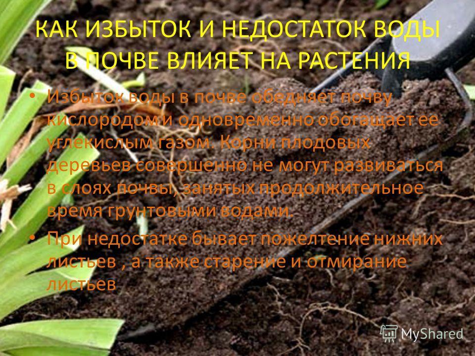 КАК ИЗБЫТОК И НЕДОСТАТОК ВОДЫ В ПОЧВЕ ВЛИЯЕТ НА РАСТЕНИЯ Избыток воды в почве обедняет почву кислородом и одновременно обогащает ее углекислым газом. Корни плодовых деревьев совершенно не могут развиваться в слоях почвы, занятых продолжительное время