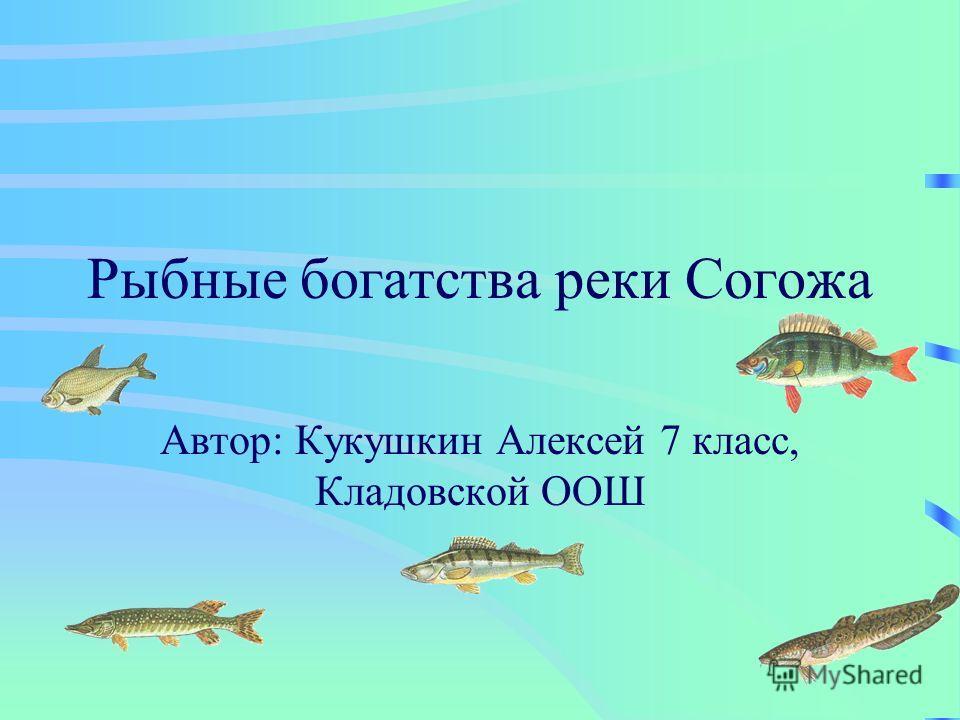 Рыбные богатства реки Согожа Автор: Кукушкин Алексей 7 класс, Кладовской ООШ