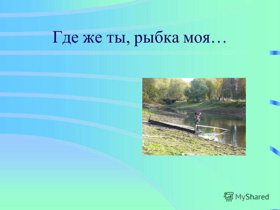 Где же ты, рыбка моя…