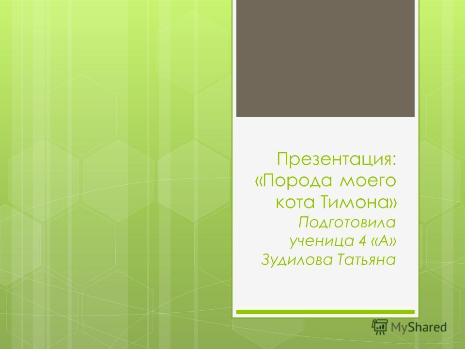 Презентация: «Порода моего кота Тимона» Подготовила ученица 4 «А» Зудилова Татьяна