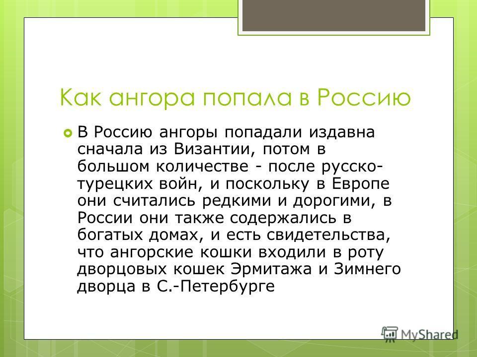 Как ангора попала в Россию В Россию ангоры попадали издавна сначала из Византии, потом в большом количестве - после русско- турецких войн, и поскольку в Европе они считались редкими и дорогими, в России они также содержались в богатых домах, и есть с