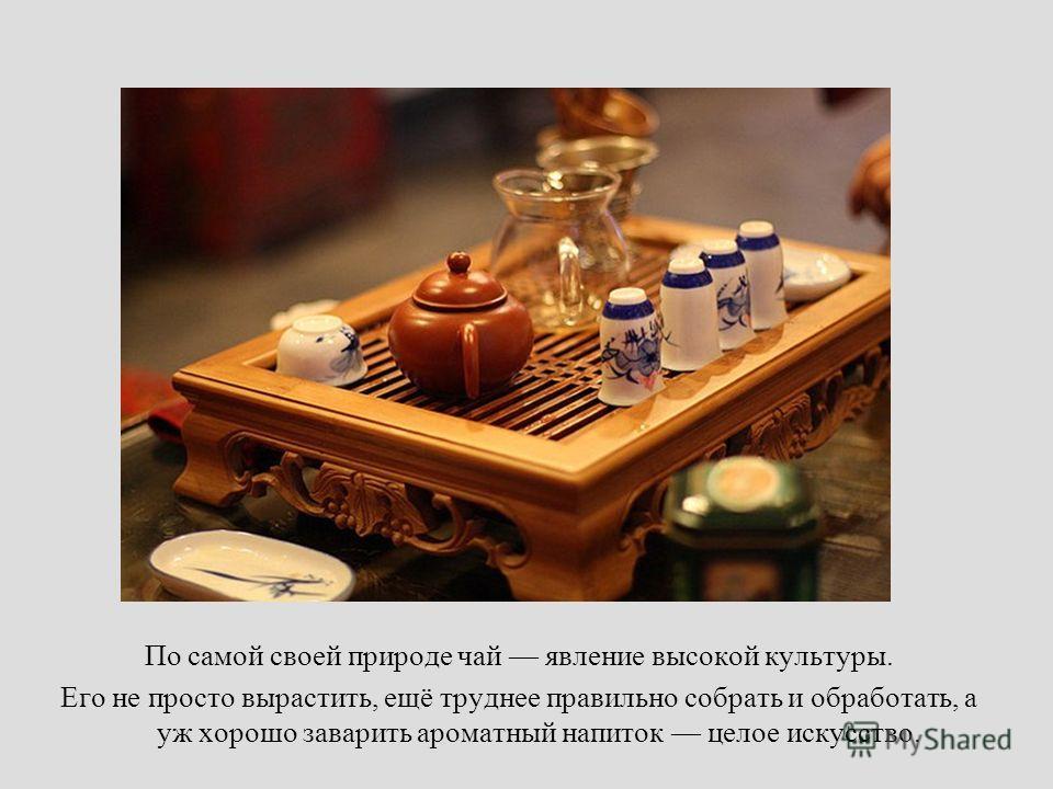 По самой своей природе чай явление высокой культуры. Его не просто вырастить, ещё труднее правильно собрать и обработать, а уж хорошо заварить ароматный напиток целое искусство.