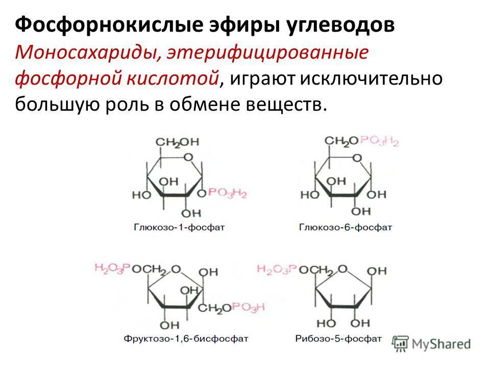 Фосфорнокислые эфиры углеводов Моносахариды, этерифицированные фосфорной кислотой, играют исключительно большую роль в обмене веществ.
