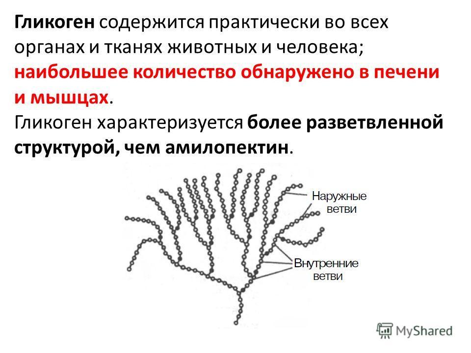 Гликоген содержится практически во всех органах и тканях животных и человека; наибольшее количество обнаружено в печени и мышцах. Гликоген характеризуется более разветвленной структурой, чем амилопектин.