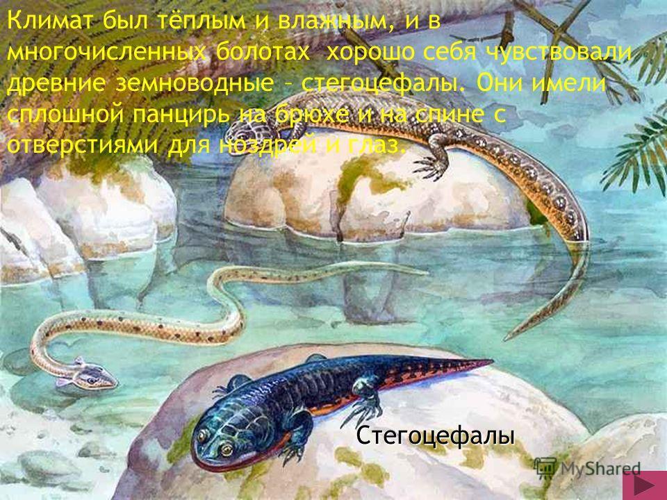 Стегоцефалы Климат был тёплым и влажным, и в многочисленных болотах хорошо себя чувствовали древние земноводные – стегоцефалы. Они имели сплошной панцирь на брюхе и на спине с отверстиями для ноздрей и глаз.