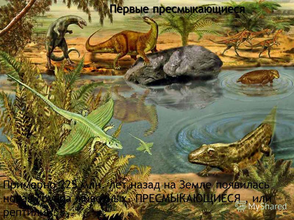 Первые пресмыкающиеся Примерно 225 млн. лет назад на Земле появилась новая группа животных- ПРЕСМЫКАЮЩИЕСЯ, или рептилии.
