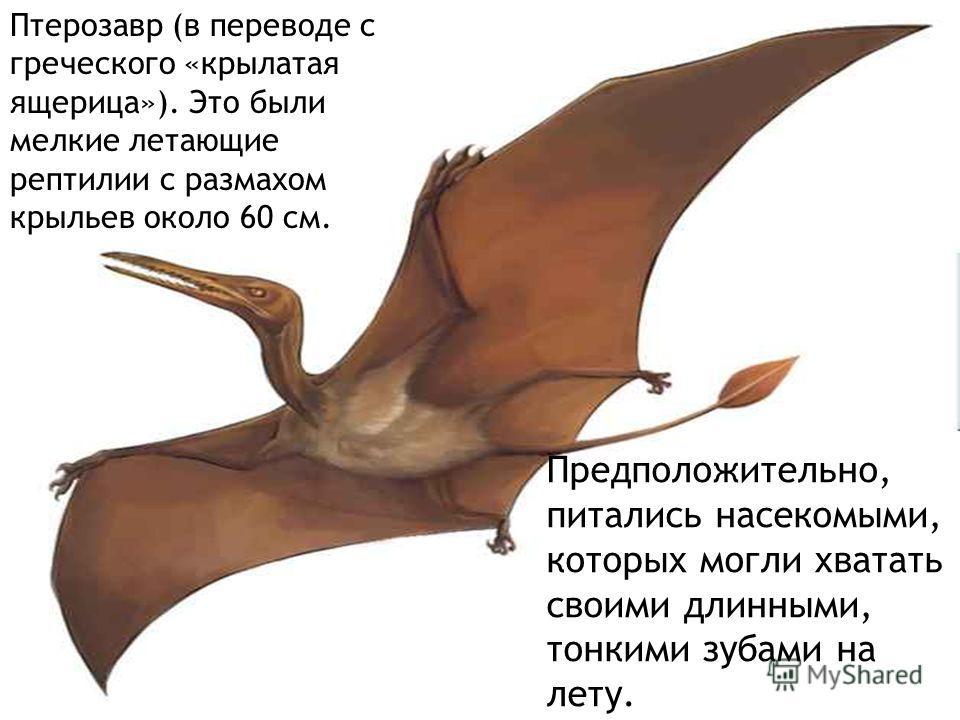 Предположительно, питались насекомыми, которых могли хватать своими длинными, тонкими зубами на лету. Птерозавр (в переводе с греческого «крылатая ящерица»). Это были мелкие летающие рептилии с размахом крыльев около 60 см.
