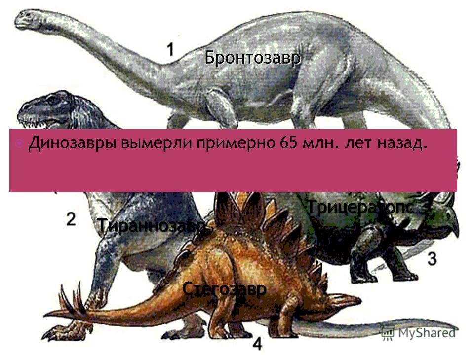 Стегозавр Трицератопс Тираннозавр Динозавры вымерли примерно 65 млн. лет назад. Бронтозавр