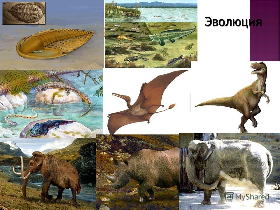 Длительный процесс исторического развития живых организмов от простых до более сложных Эволюция