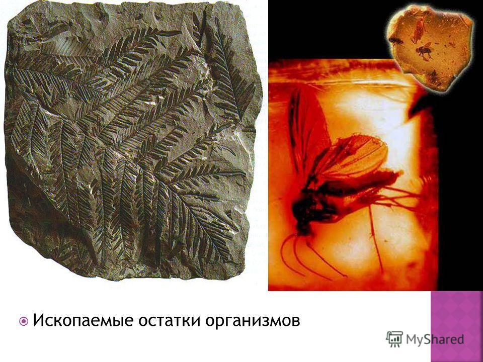 Ископаемые остатки организмов