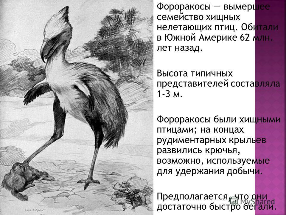 Фороракосы вымершее семейство хищных нелетающих птиц. Обитали в Южной Америке 62 млн. лет назад. Высота типичных представителей составляла 1-3 м. Фороракосы были хищными птицами; на концах рудиментарных крыльев развились крючья, возможно, используемы