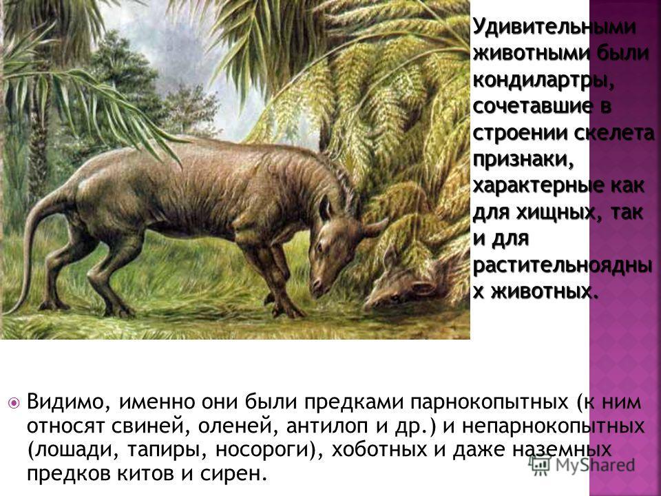 Видимо, именно они были предками парнокопытных (к ним относят свиней, оленей, антилоп и др.) и непарнокопытных (лошади, тапиры, носороги), хоботных и даже наземных предков китов и сирен. Удивительными животными были кондилартры, сочетавшие в строении