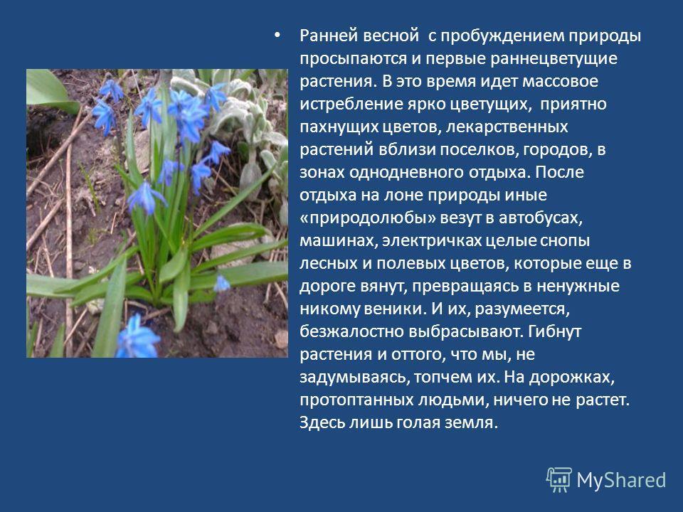 Ранней весной с пробуждением природы просыпаются и первые раннецветущие растения. В это время идет массовое истребление ярко цветущих, приятно пахнущих цветов, лекарственных растений вблизи поселков, городов, в зонах однодневного отдыха. После отдыха