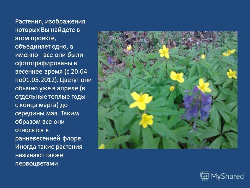 Растения, изображения которых Вы найдете в этом проекте, объединяет одно, а именно - все они были сфотографированы в весеннее время (с 20.04 по01.05.2012). Цветут они обычно уже в апреле (в отдельные теплые годы - с конца марта) до середины мая. Таки