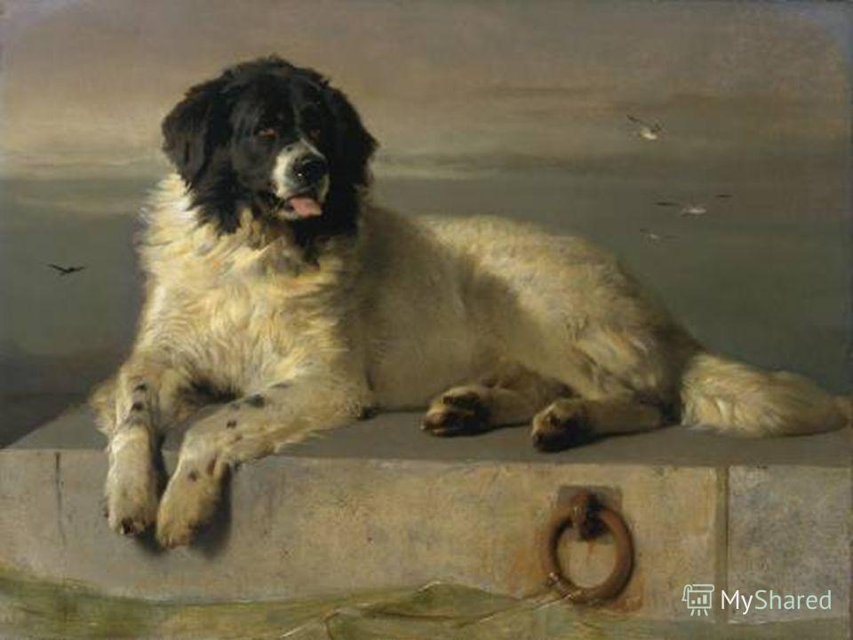 Картины Достойный член человеческого общества кисти сэра Эдвина Лендсира одна из наиболее популярных картин с изображением ньюфаундленда.