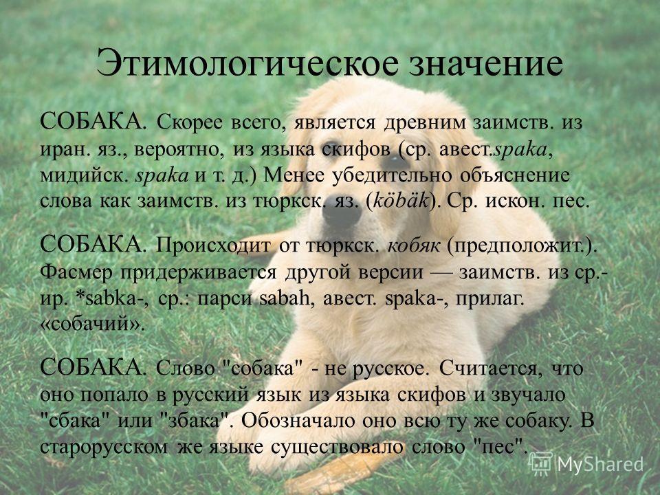 Этимологическое значение СОБАКА. Скорее всего, является древним заимств. из иран. яз., вероятно, из языка скифов (ср. авест.spaka, мидийск. spaka и т. д.) Менее убедительно объяснение слова как заимств. из тюркск. яз. (köbäk). Ср. искон. пес. СОБАКА.