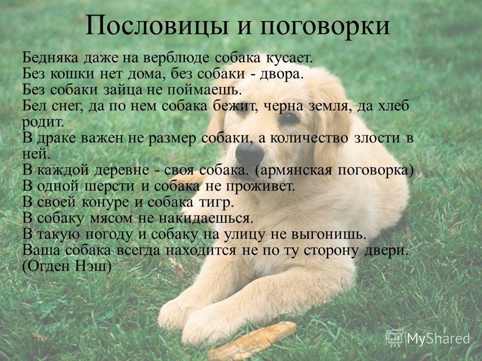Пословицы и поговорки Бедняка даже на верблюде собака кусает. Без кошки нет дома, без собаки - двора. Без собаки зайца не поймаешь. Бел снег, да по нем собака бежит, черна земля, да хлеб родит. В драке важен не размер собаки, а количество злости в не