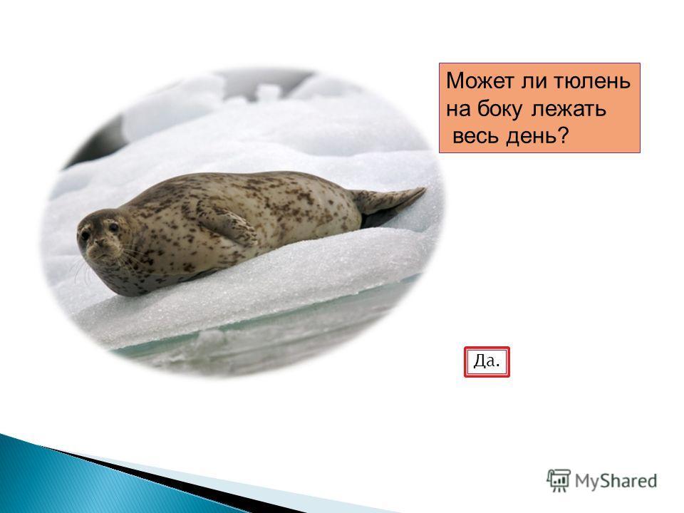 Может ли тюлень на боку лежать весь день? Да.