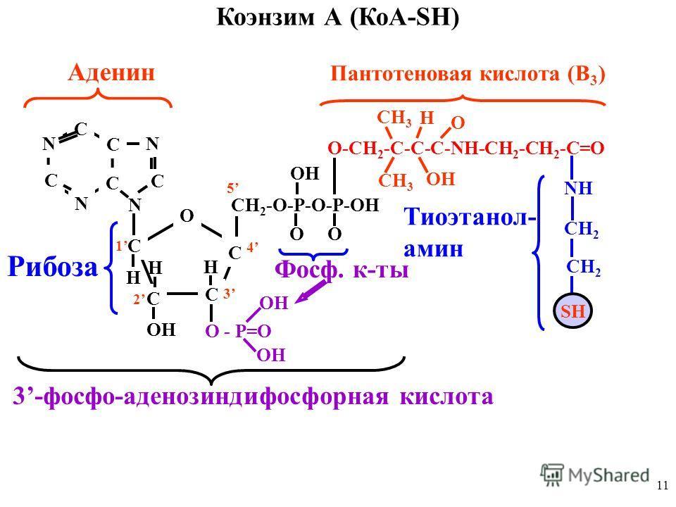 11 Коэнзим А (КоА-SH) O C C C C H H H C OH CH 2 -O-P-O-P-OH OO OH O-CH 2 -C-C-C-NH-CH 2 -CH 2 -C=O O - P=O OH CH 3 O H OH NH CH 2 SH 3-фосфо-аденозиндифосфорная кислота 1 2 3 4 5 Пантотеновая кислота (В 3 ) Тиоэтанол- амин C C C C N N N N Аденин C Ри