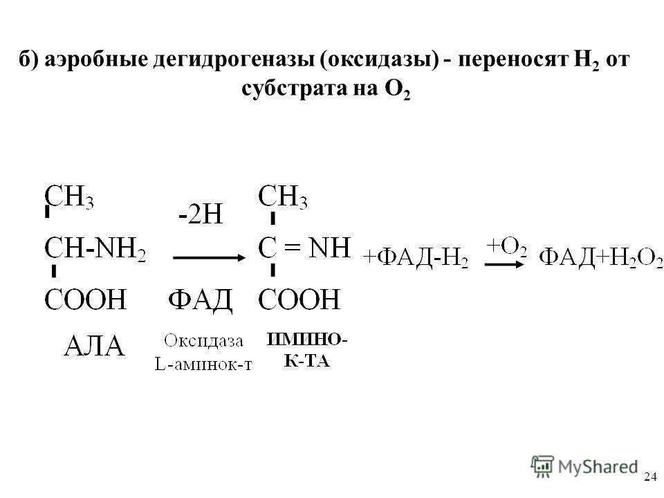 24 б) аэробные дегидрогеназы (оксидазы) - переносят Н 2 от субстрата на О 2