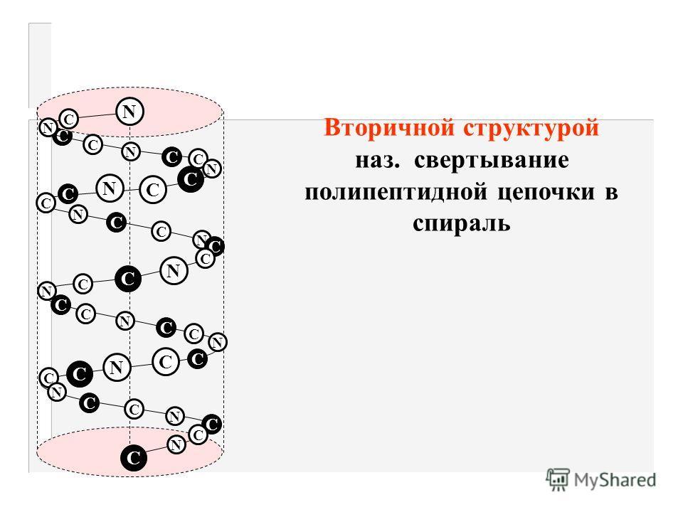 Структура белковых молекул Первичной структурой наз. последовательность чередования амк-т в полипептидной цепочке 1234 5 NН 2 - ала - лиз - мет - вал - асп - СООН N - конец С- конец