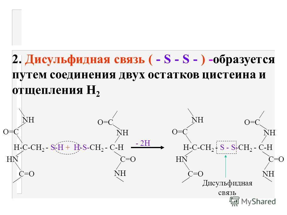 Типы связей в молекуле белка Ковалентные (химические) R2R2 R1R1 NH 2 CO-OH HOOC N H H - H 2 O H 2 N - R 1 - CO - NH - R 2 - COOH дипептид 1. Пептидная -CO - NH - образуется в результате соединения групп - NH 2 и COOH соседних амк-т где R 1 и R 2 - ос