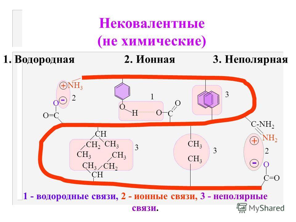 2. Дисульфидная связь ( - S - S - ) -образуется путем соединения двух остатков цистеина и отщепления Н 2 H-C-CH 2 - S-H + H-S-CH 2 - C-H O=C NH HN C=O NH O=C C=O NH H-C-CH 2 - S - S-CH 2 - C-H O=C NH HN C=O NH O=C C=O NH - 2H Дисульфидная связь