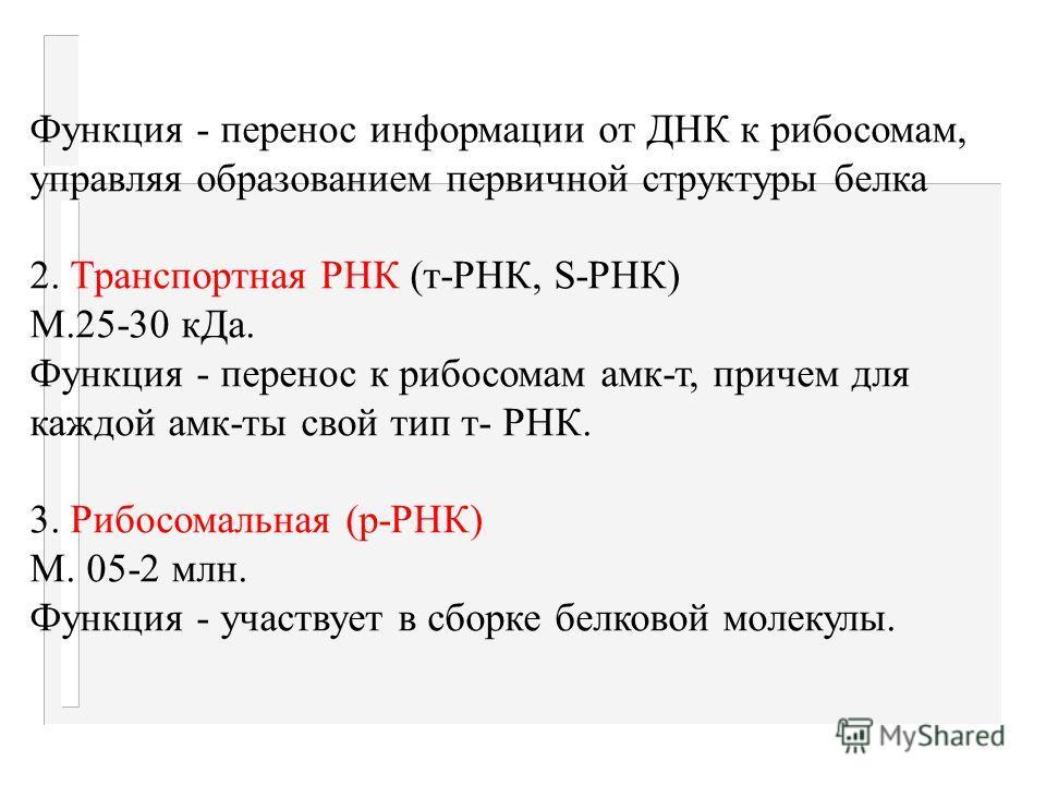 Нуклеотиды соед. в цепочку ковалентно фосфоди - эфирной связью от ОН третьего углеродного атома пентозы к ОН фосф. к-ты: аденин - рибоза - фосф. к-та о урацил - рибоза - фосф. к-та. Строение и функции РНК Сод: 1) аденин цитозин гуанин урацил (нет тим