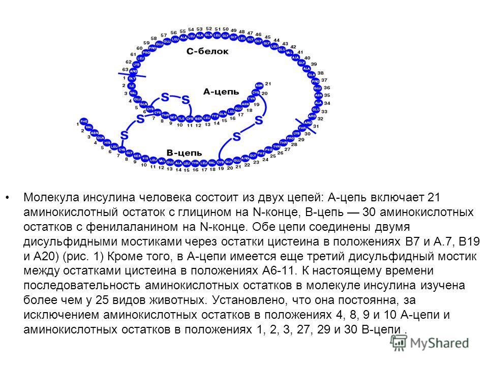 Молекула инсулина человека состоит из двух цепей: А-цепь включает 21 аминокислотный остаток с глицином на N-конце, В-цепь 30 аминокислотных остатков с фенилаланином на N-конце. Обе цепи соединены двумя дисульфидными мостиками через остатки цистеина в