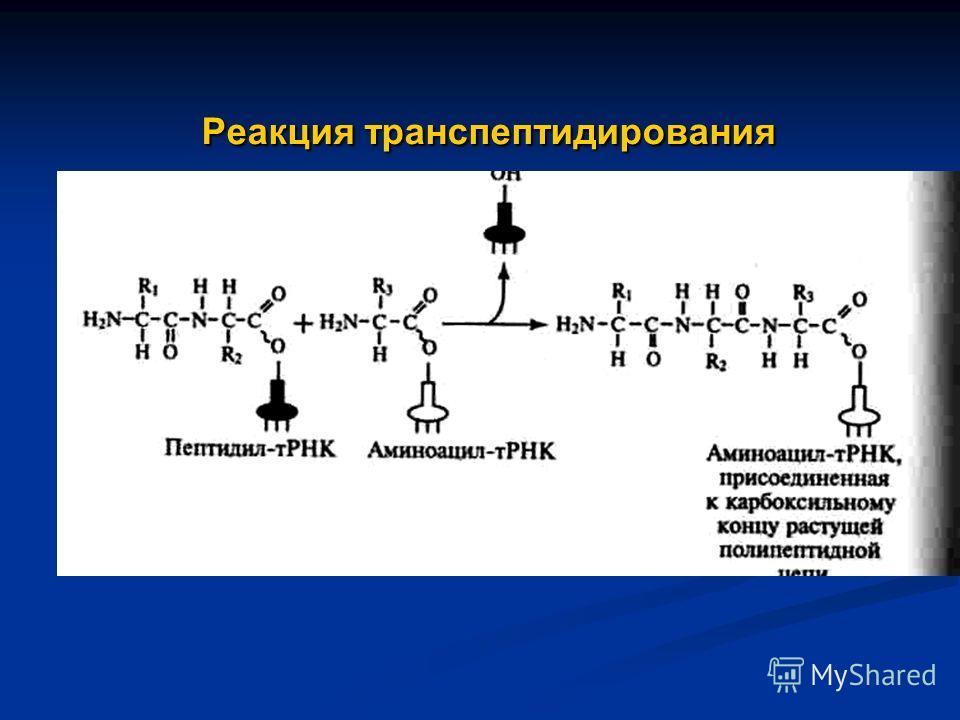 Реакция транспептидирования