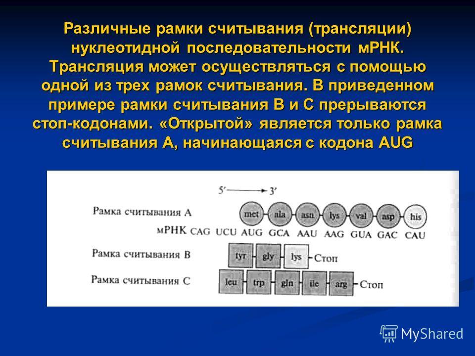 Различные рамки считывания (трансляции) нуклеотидной последовательности мРНК. Трансляция может осуществляться с помощью одной из трех рамок считывания. В приведенном примере рамки считывания В и С прерываются стоп-кодонами. «Открытой» является только