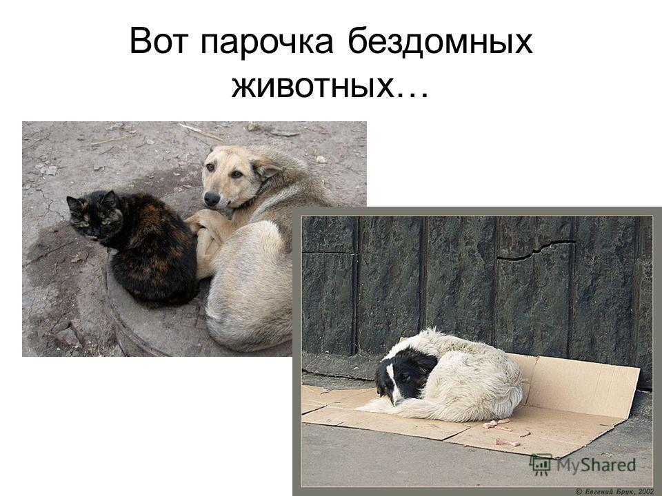 Вот парочка бездомных животных…