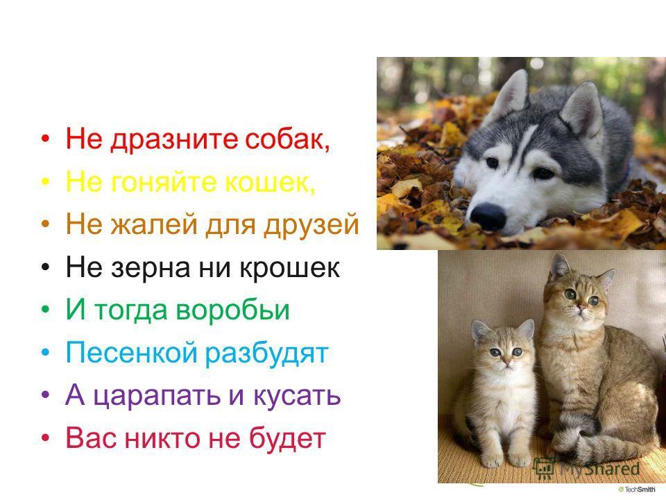Не дразните собак, Не гоняйте кошек, Не жалей для друзей Не зерна ни крошек И тогда воробьи Песенкой разбудят А царапать и кусать Вас никто не будет