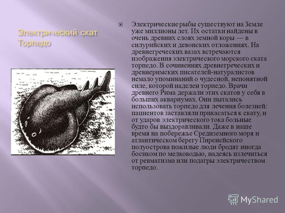 Электрический скат Торпедо Электрические рыбы существуют на Земле уже миллионы лет. Их остатки найдены в очень древних слоях земной коры в силурийских и девонских отложениях. На древнегреческих вазах встречаются изображения электрического морского ск