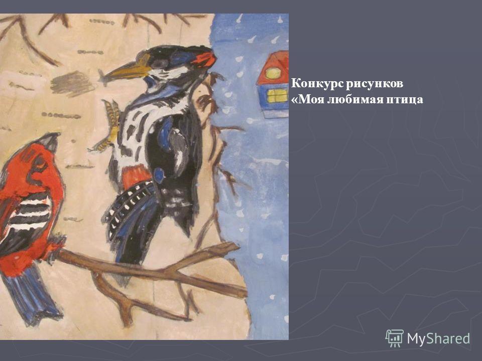 Конкурс рисунков «Моя любимая птица