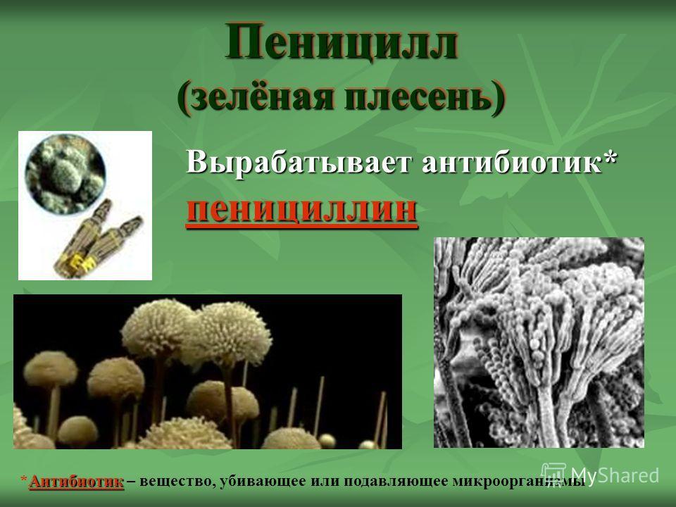 Пеницилл (зелёная плесень) Вырабатывает антибиотик* пенициллин Антибиотик *Антибиотик – вещество, убивающее или подавляющее микроорганизмы