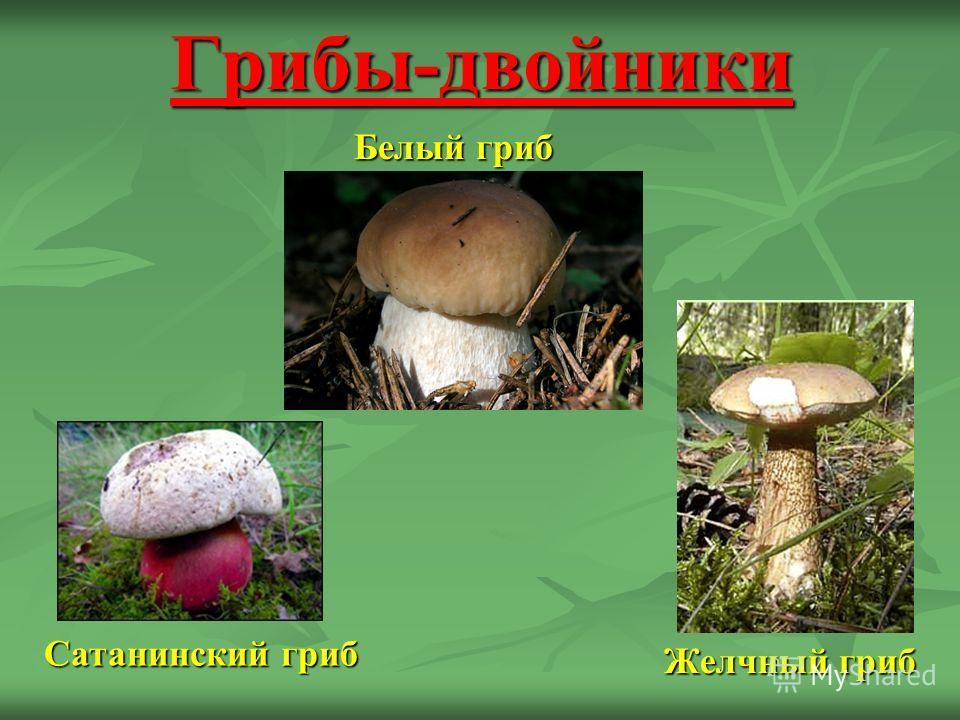 грибы паразиты сообщение