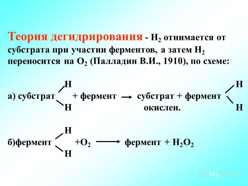 Теория дегидрирования - Н 2 отнимается от субстрата при участии ферментов, а затем Н 2 переносится на О 2 (Палладин В.И., 1910), по схеме: Н Н а) субстрат + фермент субстрат + фермент Н окислен. Н Н б)фермент +О 2 фермент + Н 2 О 2 Н