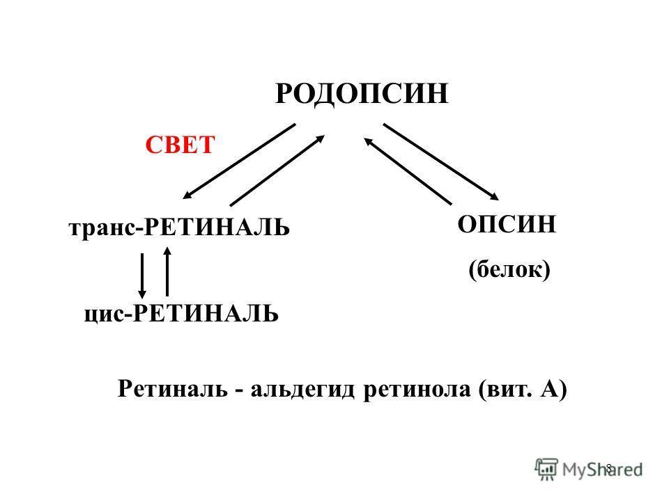 8 РОДОПСИН транс-РЕТИНАЛЬ ОПСИН цис-РЕТИНАЛЬ СВЕТ (белок) Ретиналь - альдегид ретинола (вит. А)