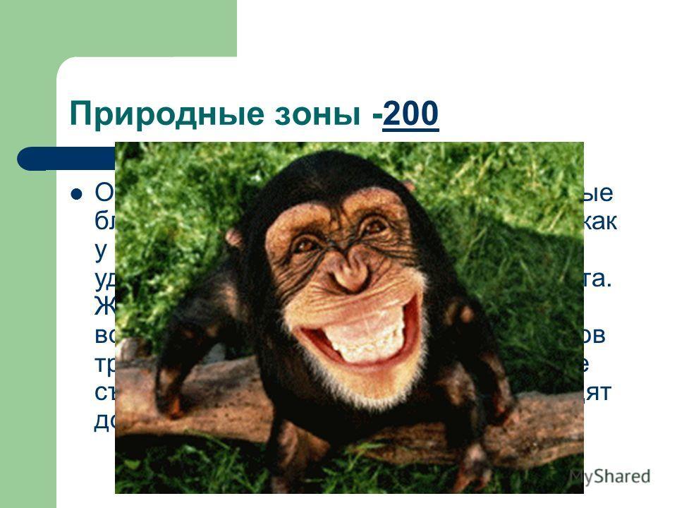 Природные зоны -200200 О каком животном идет речь: «Они самые ближайшие наши родственники. Зубов как у нас, 32. Видели, как самка-подросток удаляла молочный зуб у младшего брата. Живут стадами. Не выносят громких воплей, кроме собственных. По 6-8 час