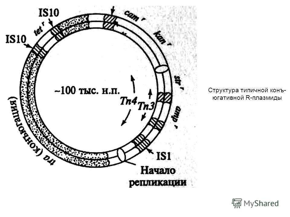 Структура типичной конъ- югативной R-плазмиды