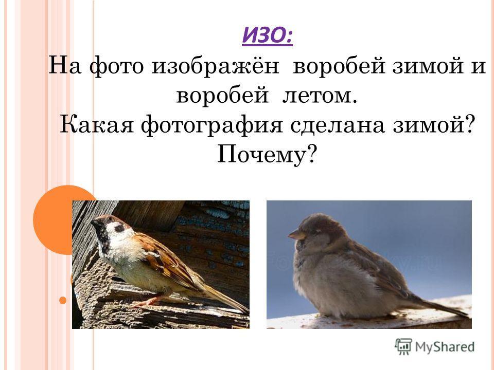 ИЗО: На фото изображён воробей зимой и воробей летом. Какая фотография сделана зимой? Почему?