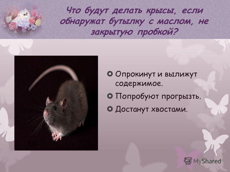 Опрокинут и вылижут содержимое. Попробуют прогрызть. Достанут хвостами. Что будут делать крысы, если обнаружат бутылку с маслом, не закрытую пробкой?